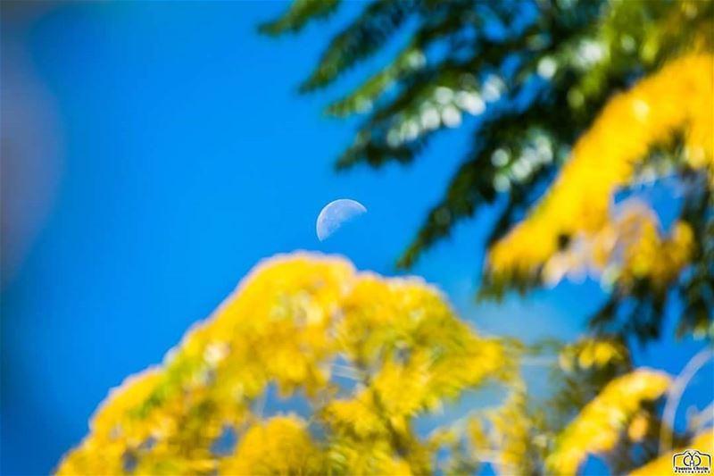بين أحضان أخضر الربيع و أصفر الخريف ... نصف قمر ... moon halfmoon ...