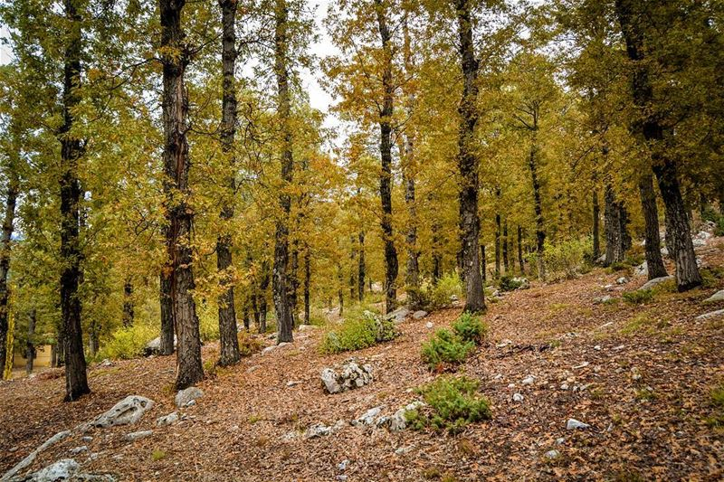 .The enchanted forest, Akkar, Lebanon. This is an absolute autumnal... (The Enchanted Forest)