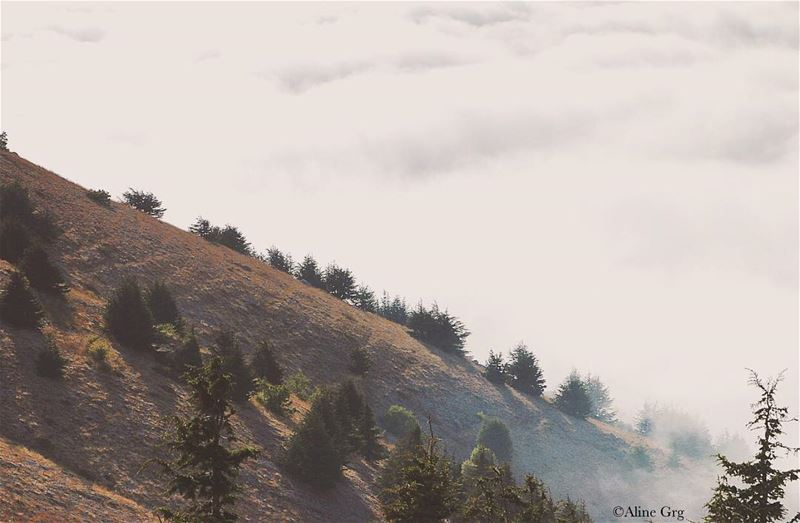 """Sometimes Hope gets Lost in a Fog..."" ☁️☁️☁️ october autumn fog foggy... (Al Shouf Cedar Nature Reserve)"