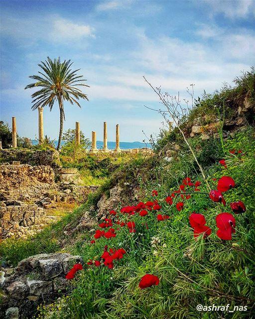 يسعد صباحك يا حلووعدك لنا لا تبدله...نبقى سوى ويبقى الهوىبقلوبنا صافي وح (Tyre, Lebanon)