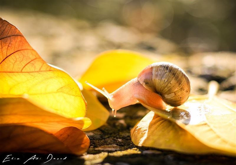Everybody seems to be enjoying Autumn 🍂  snail  fall  autumn  leaves ...