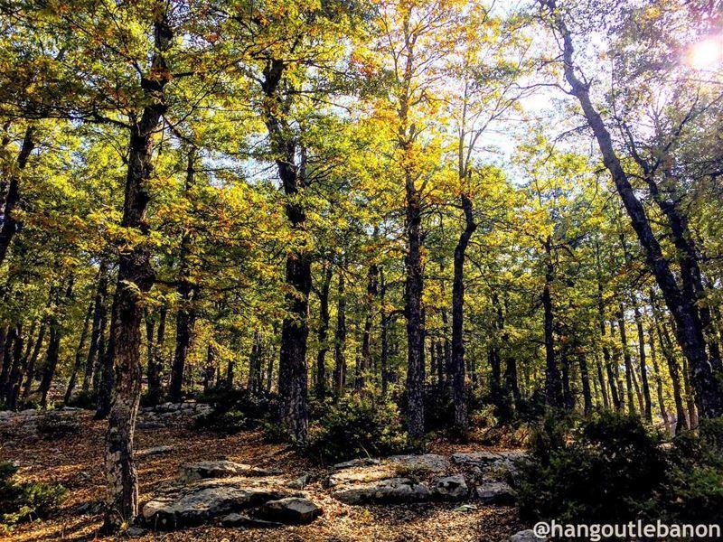 غابة العذر💛— hangoutlebanon lebanonpocketguide liveloveakkar ... (غابة العذر)