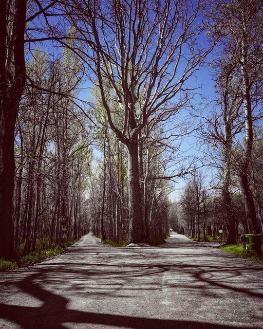 Shades of nature moods... naturephotography natureart lebanonspotlights... (Deïr Taanâyel, Béqaa, Lebanon)