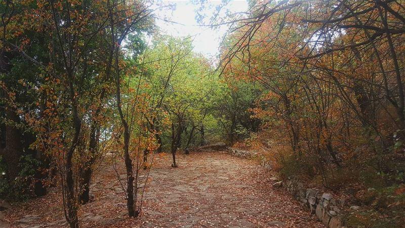 و ما حدا يعرف بمطرحنا الا السما و ورق تشرين🍂🍂🍂... morning oaktree ...