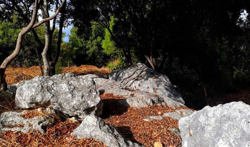 autumn rasnhash batroun lebanon kalawounphoto monbeauliban ... (Lebanon)