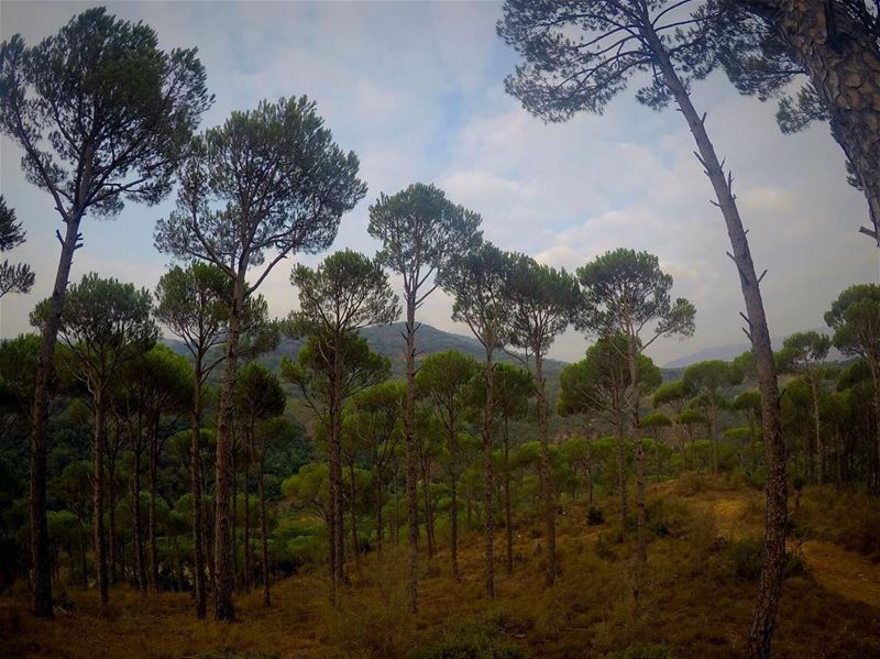 No therapy needed 👆🏻🍃💆🏻  pineforest  bhanin  jezzine  southlebanon ... (Jezzîne, Al Janub, Lebanon)