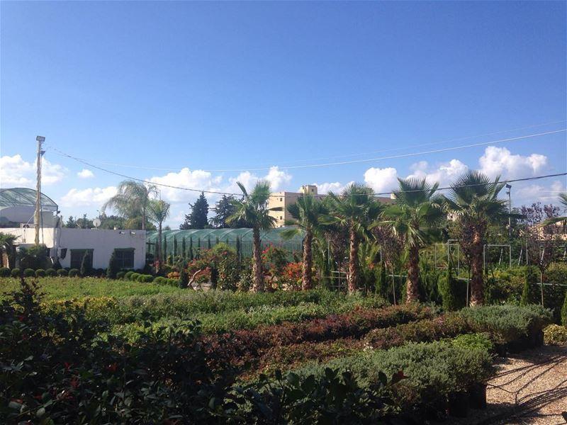 When nature smiles, I smile 💚💙 blue green love ~ (Saïda, Al Janub, Lebanon)