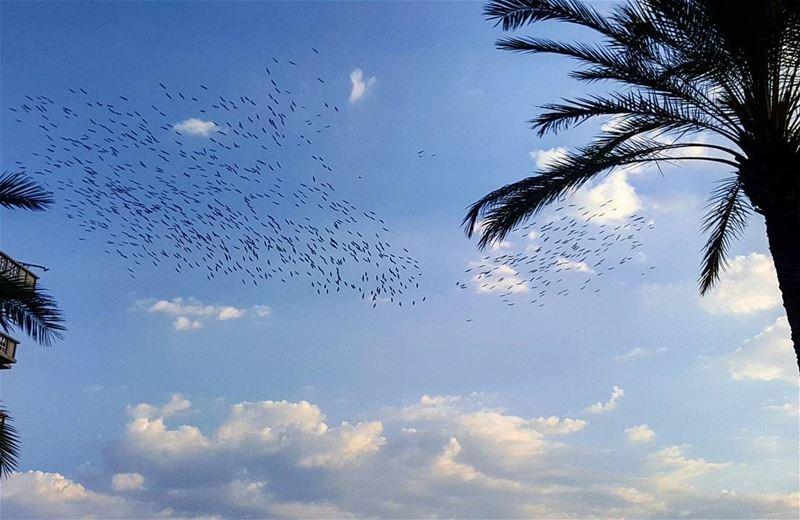 migratingbirds lebanoninapicture ptk_lebanon livelovebeirut ... (Beirut, Lebanon)