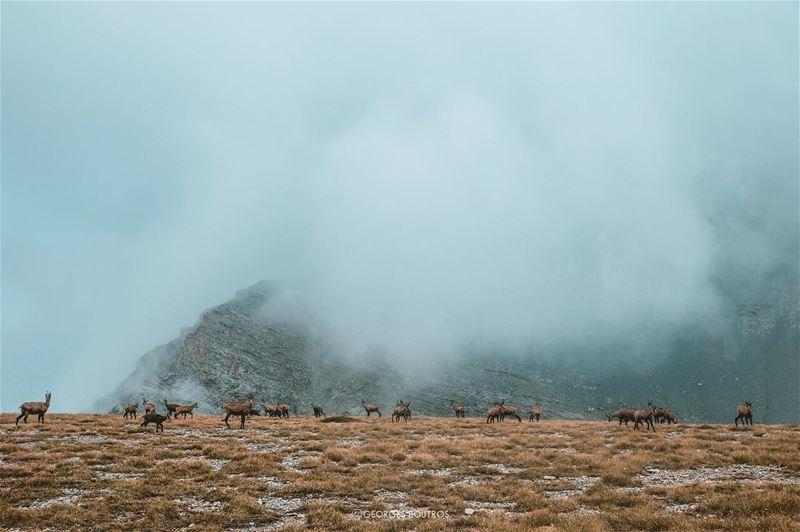 •Split • 🐐☁️-- landscape georgesboutrosphotography canon ...