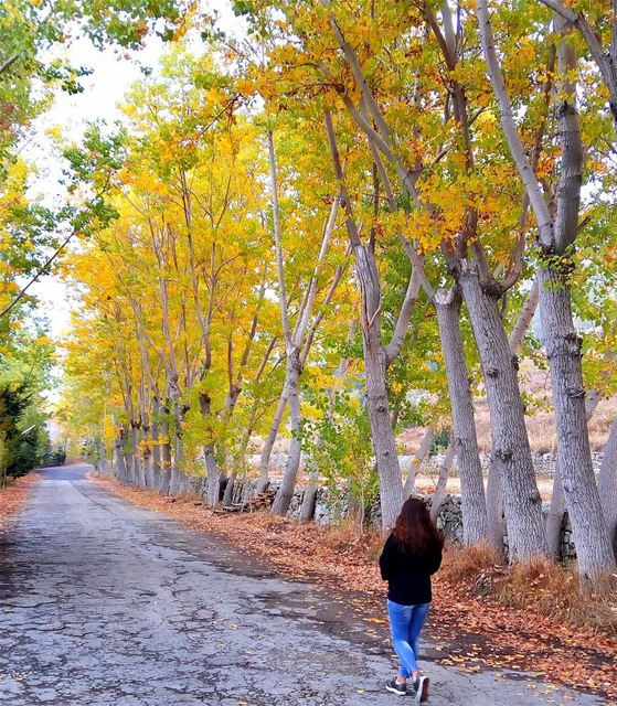 Beautiful Autumn 🍁🍂 lebanon nature naturelovers natureporn ... (El Laqloûq, Mont-Liban, Lebanon)