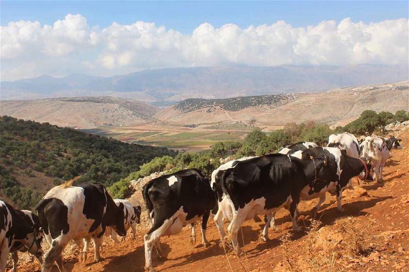 beqaa tonature coworkingspace worldpeace lebanonshots insta_lebanon ...