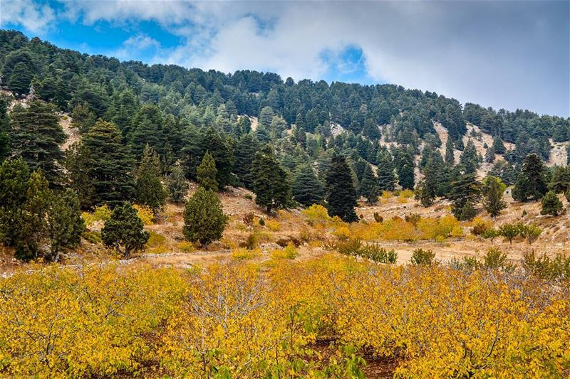 .Al kamoua forest, North of Lebanon. A superior scenery with irresistible... (El Qamouaa)