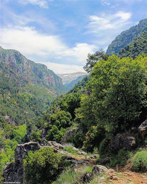 tb qannoubine holy valley kadisha northlebanon nature trees ... (Ouâdi Qannoûbîne, Liban-Nord, Lebanon)