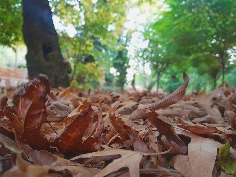 اوراق الخريف الصفرا الي بتوقع بتروح بترجع وراق جديدة تنبض فيها الروح 🍂🍁🍂