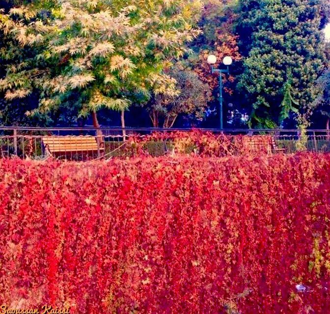 autumn🍁  colors  zahleh ...