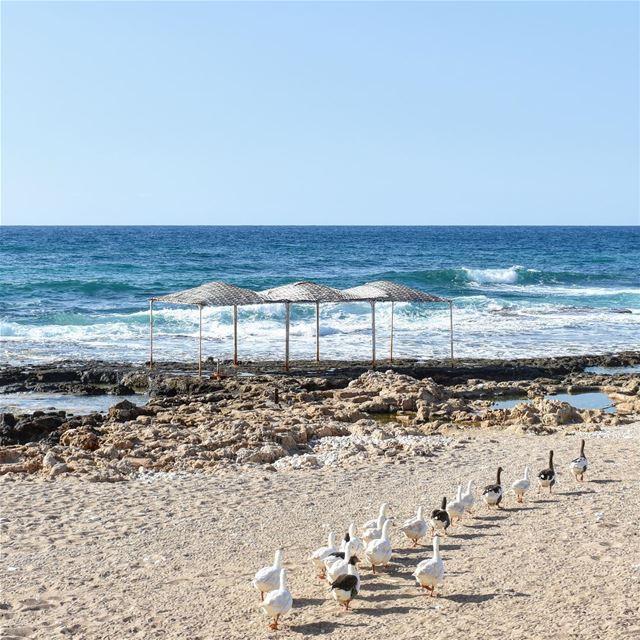 Vive les excursions 🌊🦆••••••••••••••••••••••••••• sea seaside beach ... (Tyros resort,Nakoura)