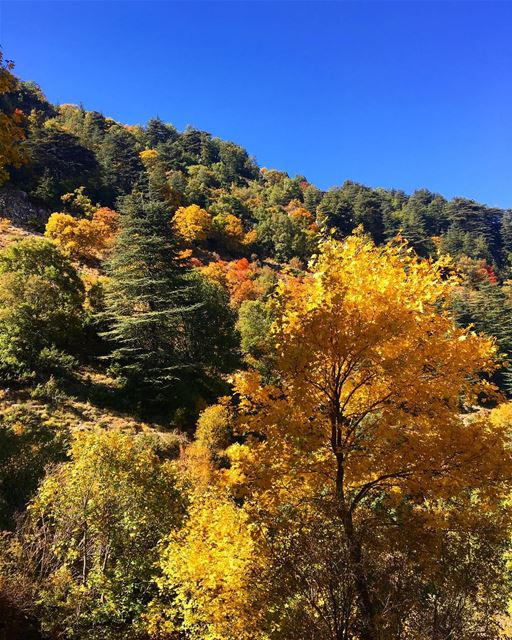 Fall 🍁  lebanon  ehden  reserve  nature  naturephotography  fall ... (Horsh Ehden)