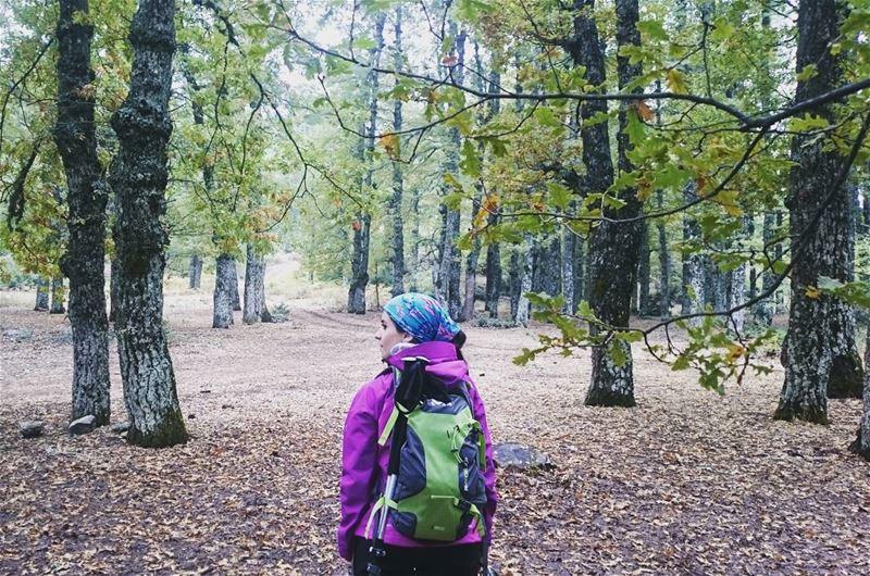 bestofleb hiking adventure nature forest lebanonmania instalebanon...