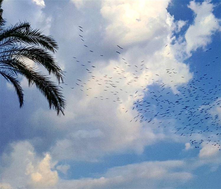 Migrating birds birds migratingbirds lebanoninapicture ptk_lebanon ... (Beirut, Lebanon)