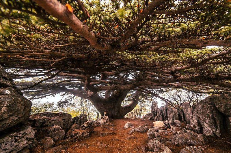 تحت ارزك يا لبنان 🌲..... landscape cedar cedars trees tree forest... (Arz el Maasser)