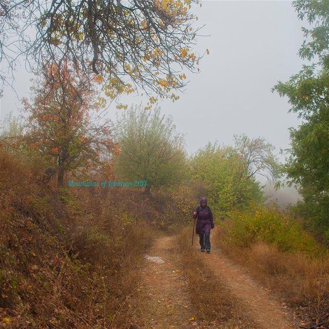 First Hike under the Rain! rain rainhike fallrain fallpath ... (Kfardebian)