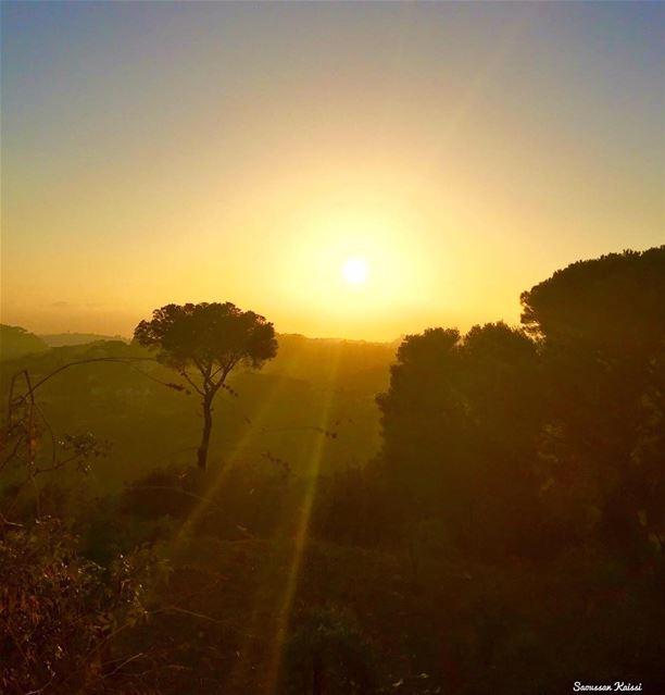 sunset pinestrees colors🎨 lebanon ...