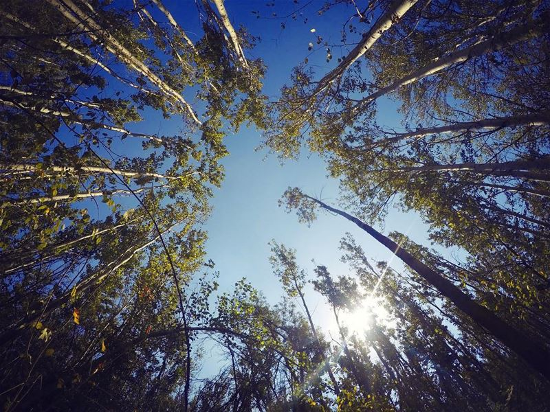 Look up, nothing is limiting you... nature tree hope lookup trees ... (لبنان)