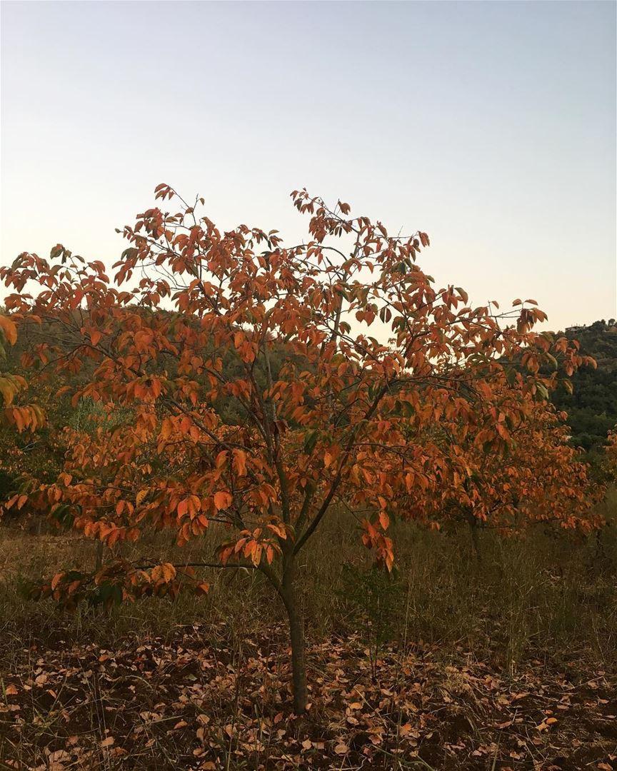 Fall 🍂...... lebanonspotlights thisismycommunity nationalart ... (Jebrâyel, Liban-Nord, Lebanon)