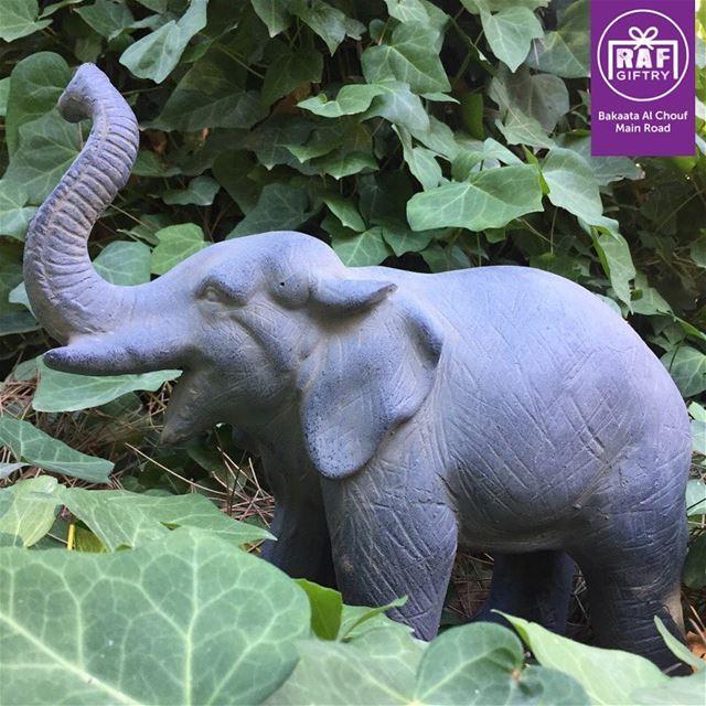Who said elephants don't enjoy the Lebanese nature?! 🍀🐘 (Raf Giftry)
