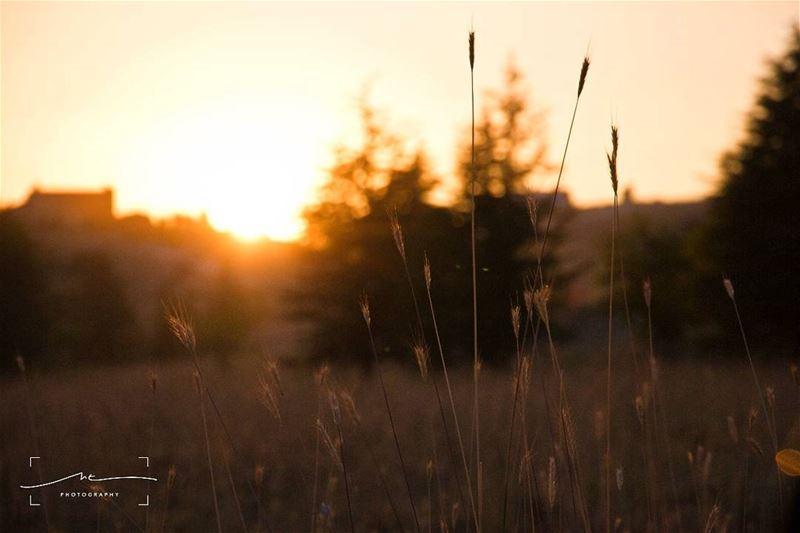 Cold weather, warm sunsets ❤ (Bcharre El Arez بشري الأرز)