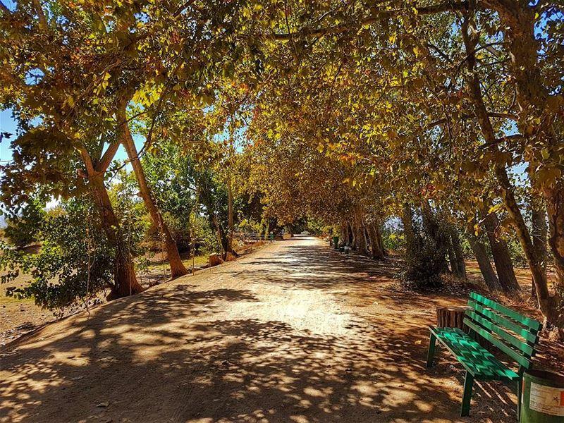 Autumn...the year's last, loveliest smile. autumn autumnleaves season ... (Deïr Taanâyel, Béqaa, Lebanon)