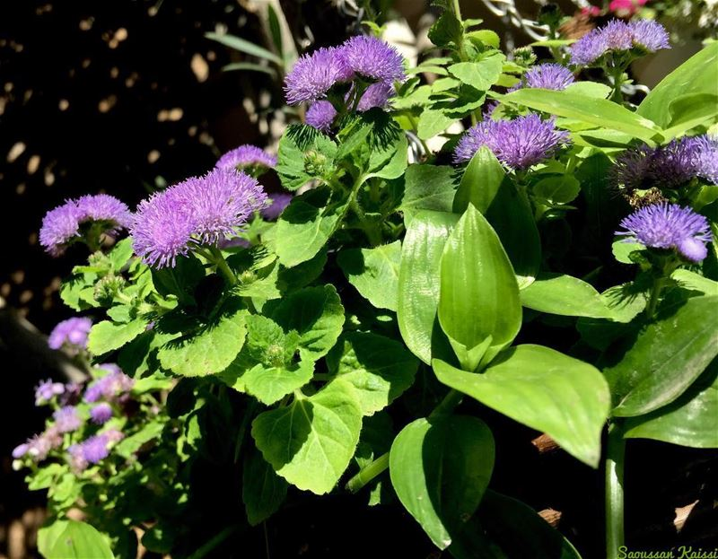 flowers purple today...