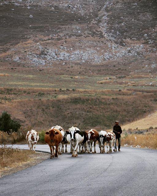 .... photography photographer photooftheday landscape... (Kfar Roummâne, Beyrouth, Lebanon)