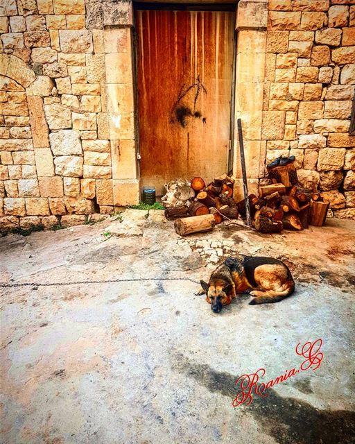 amiounalkoura aldar oldhouse wood dog oldstreet oldtown ... (Amioûn, Liban-Nord, Lebanon)