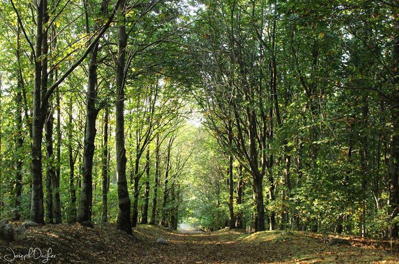 🍁Such a beautiful place... (غابة الصنوبر - جبل النبي متّى ...)
