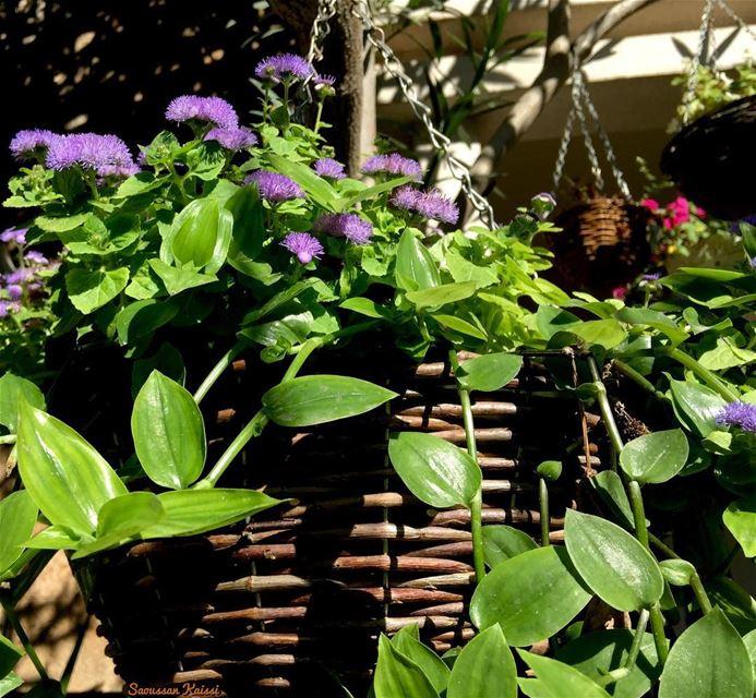 flowers purple today mygarden ...