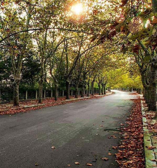 Autumn's beauty🍁🍂 sawfar mountlebanon lebanon lebanontimes ... (Sawfar, Mont-Liban, Lebanon)