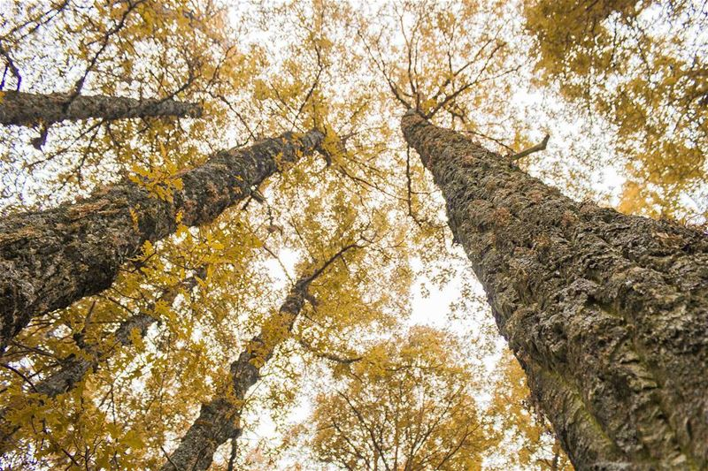 Autumn is here...👀🍁🍂 (غابة العذر)