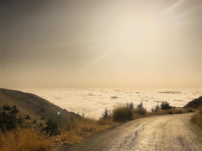 ومشيت بطريقي حكمني الزمان... tb road sunset abovetheclouds clouds ... (Al Shouf Cedar Nature Reserve)