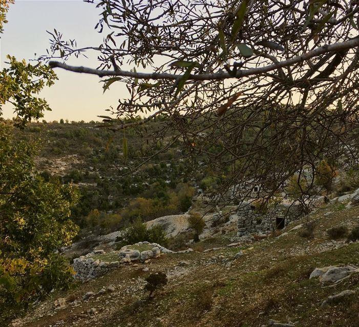 Few leaves left 🍁 🍂........ lebanon autumn bentael outdoors ... (Bentaël, Mont-Liban, Lebanon)