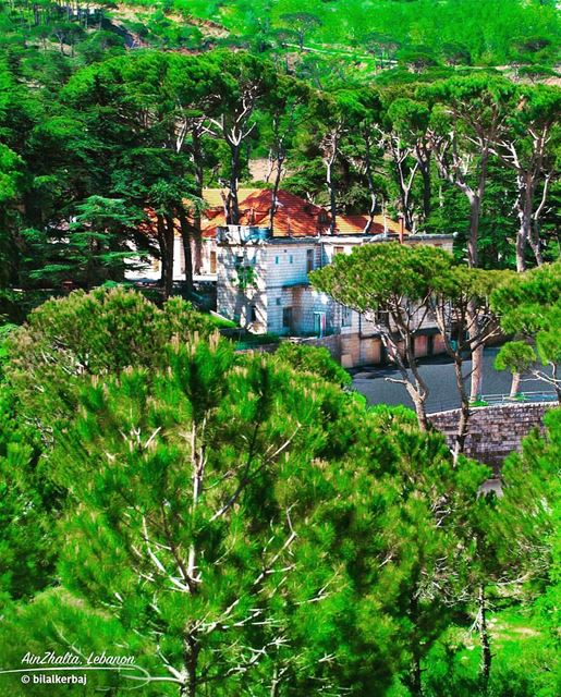 ainzhalta lebanesehouses amazing lebanon pinetrees nature nest colorful... (Aïn Zhalta, Mont-Liban, Lebanon)