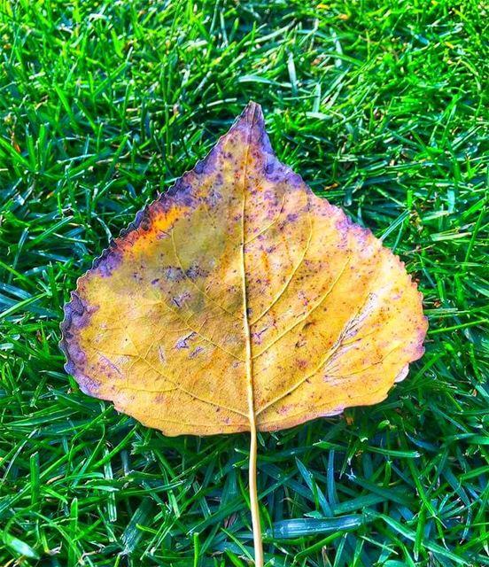 متل كأنو الخريف واقف على الباب🍂🍃........ autum autumn leaves ... (South Governorate)