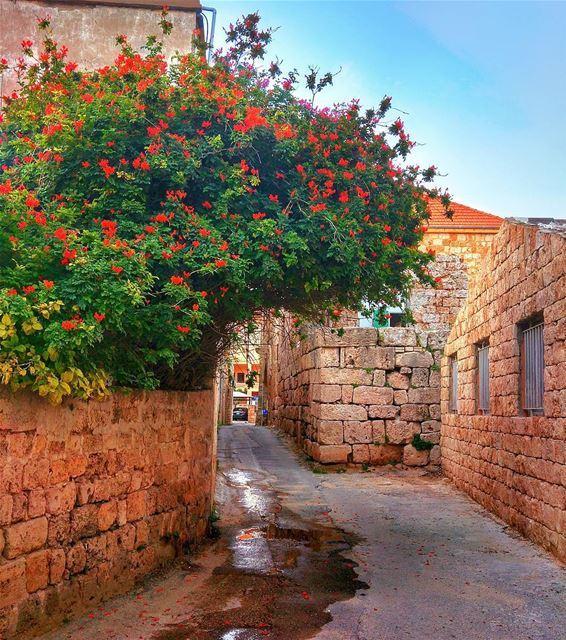 😎 lebanon nature throwback naturelovers natureporn landscape ... (Batroûn)
