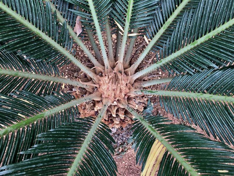 """شجرة نخيل (📸 """"لبنان 24"""")⠀⠀⠀⠀⠀⠀⠀⠀⠀ ⠀⠀⠀⠀⠀⠀⠀⠀⠀⠀⠀⠀ ⠀⠀⠀⠀⠀⠀⠀⠀⠀⠀⠀⠀ ⠀⠀⠀⠀⠀⠀⠀⠀⠀⠀⠀⠀"""