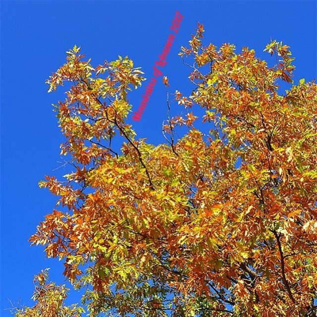 Changing from the fall golden hour...here's a perfect blue sky...