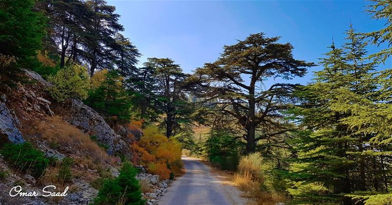Al shouf Cedar Nature Reserve was declared in 1996. The largest nature... (Shouf Cedar Ain Zhalta)