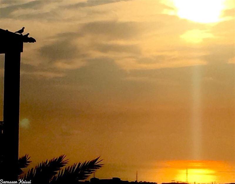 sunset birds goldensea sea colors🎨 ...