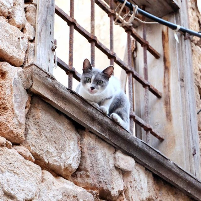 """If cats could talk, they wouldn't"" cat feline streetphotography ... (El Mîna, Liban-Nord, Lebanon)"