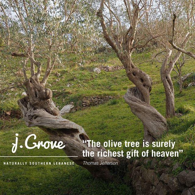 Quote QuoteOfTheWeek jGrove OliveTree Lebanese Land Green ...