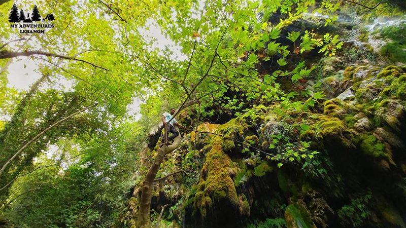 Monkeying around🐒Event this Sunday🚶Hiking to Wadi Qannoubin🍃... (Wadi Qannubin, Liban-Nord, Lebanon)